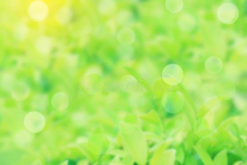 Fundo verde obscuro da natureza com bokeh usando-se para o design web ou o papel de parede foto de stock
