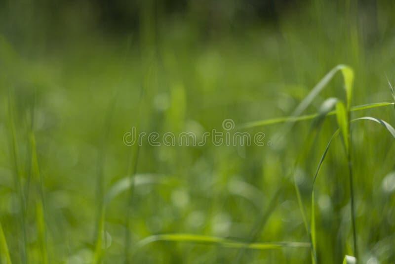 Fundo verde perfeito pela grama fresca imagem de stock