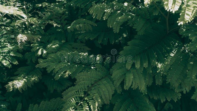 Fundo verde tropical da folha, tema escuro do tom fotografia de stock royalty free