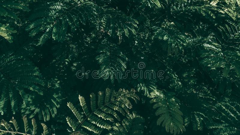 Fundo verde tropical da folha, tema escuro do tom imagens de stock