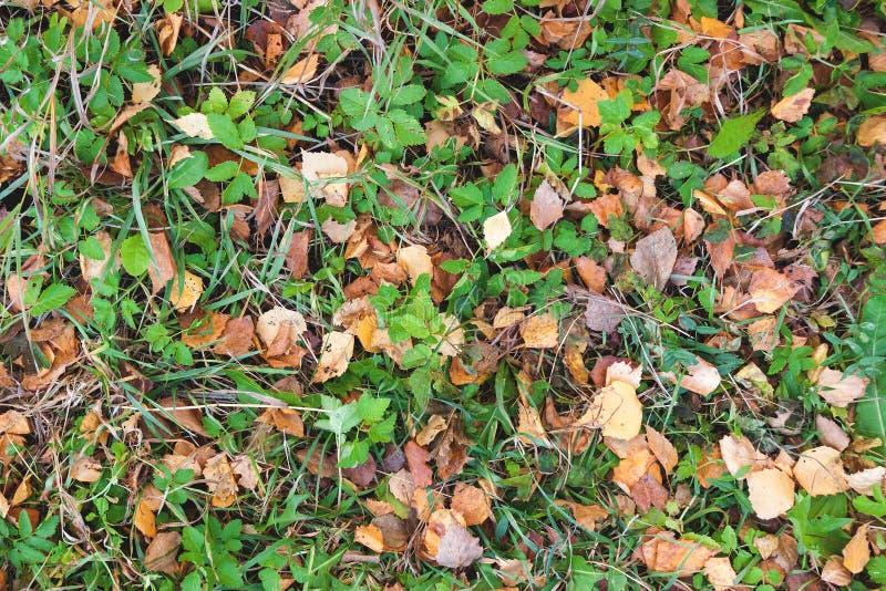 Fundo verde, vermelho e alaranjado das folhas de outono foto de stock royalty free