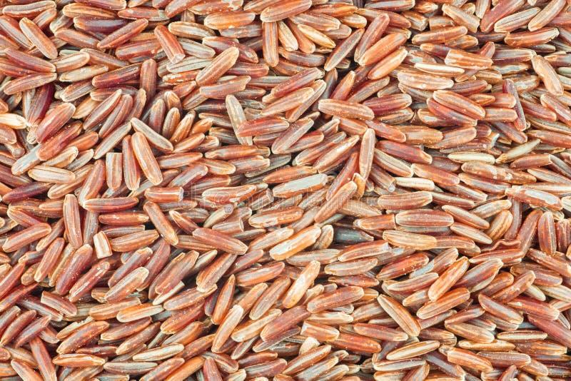 Fundo vermelho do arroz da carga imagens de stock royalty free