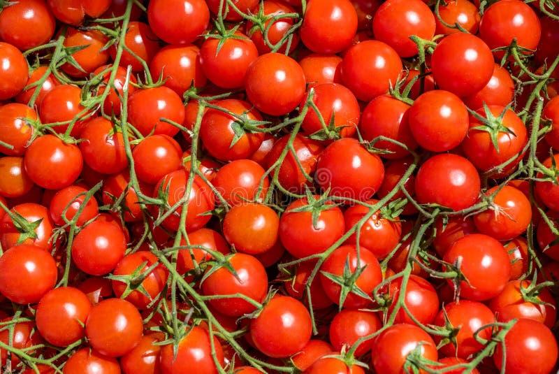 Fundo vermelho dos tomates Grupo de tomates de cereja frescos fotos de stock