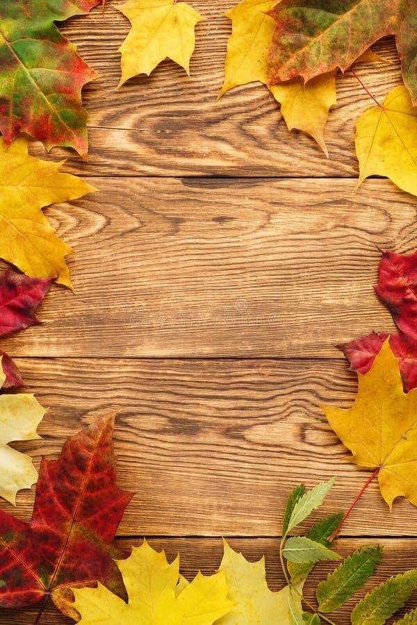 Fundo vermelho e amarelo do quadro das folhas de bordo foto de stock