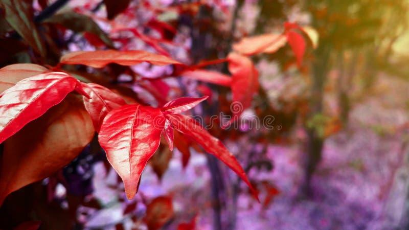 Fundo vermelho natural da paisagem das plantas foto de stock royalty free