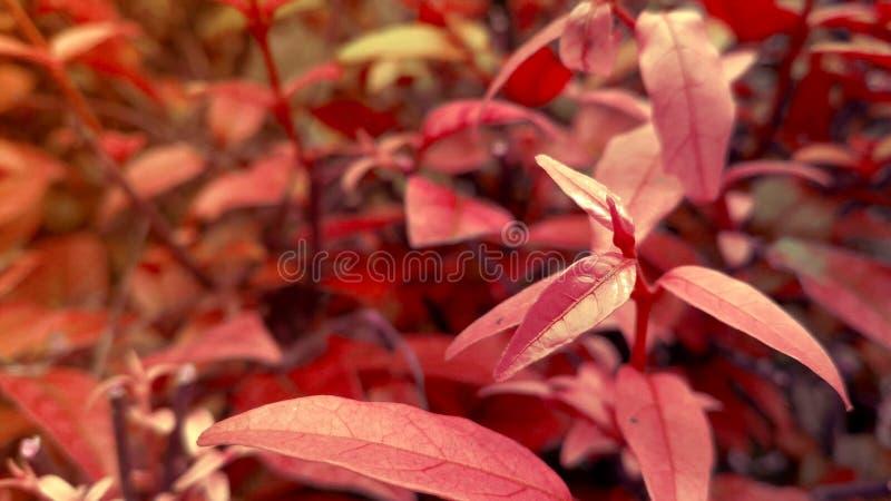 Fundo vermelho natural da paisagem das plantas fotos de stock royalty free