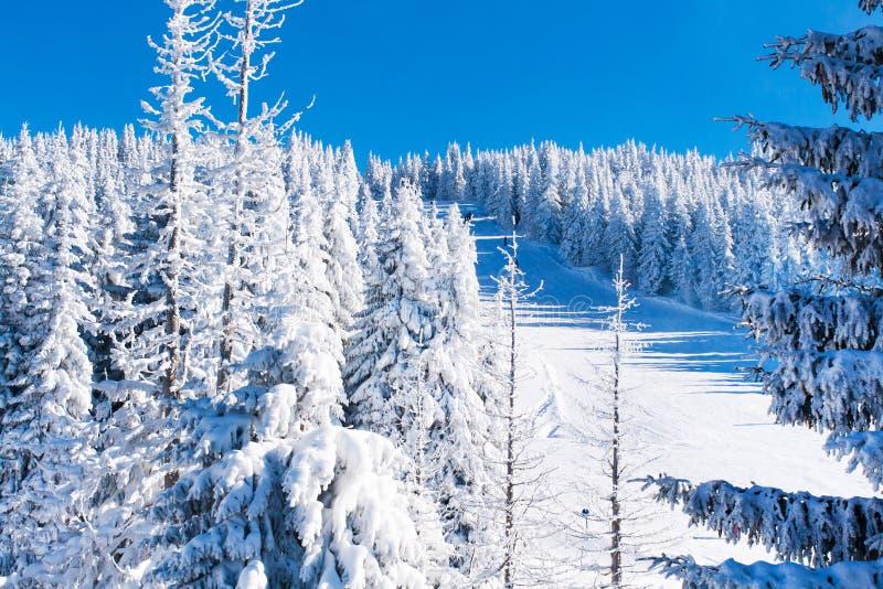 Fundo vibrante das férias do esqui do inverno com pista e pinheiros cobertos por nevadas fortes fotografia de stock