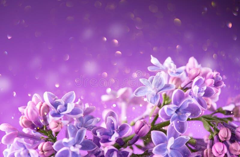 Fundo violeta do projeto da arte do grupo das flores do lil?s Close up lil?s violeta bonito das flores fotos de stock