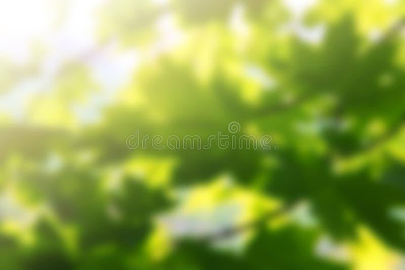 Fundos da mola com luz do sol imagens de stock royalty free