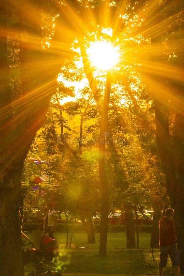 Fundos: luz do sol fotos de stock royalty free