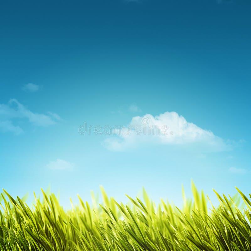 Fundos naturais abstratos com folha do verão imagem de stock royalty free