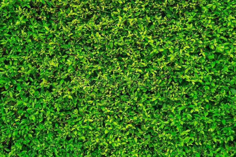 Fundos verdes da rua fotos de stock royalty free