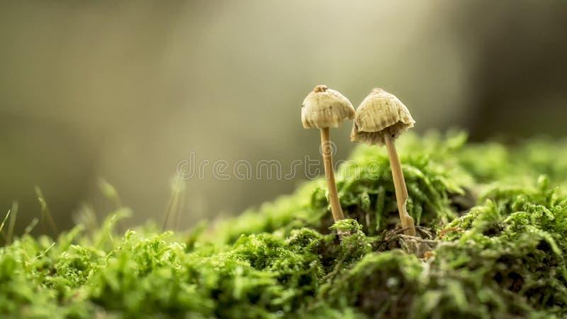 Funghi在森林里 免版税库存图片
