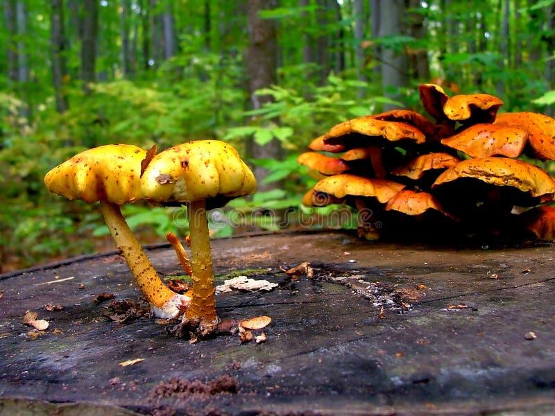 Download Funghi immagine stock. Immagine di piante, deperimento - 206493