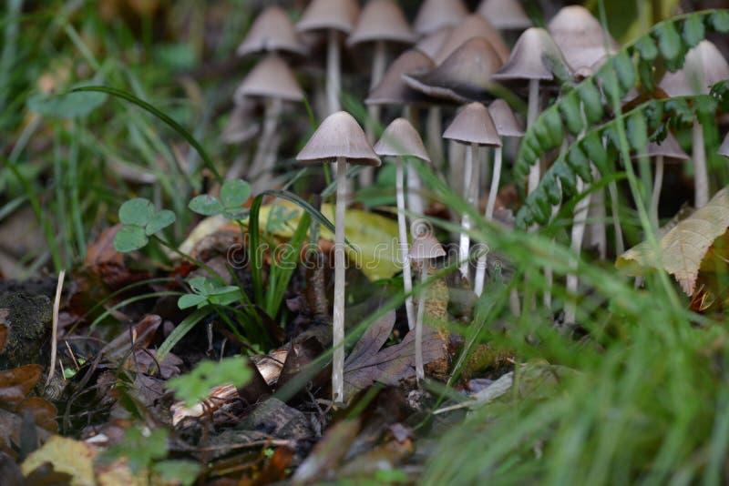 funghi fotografia stock libera da diritti