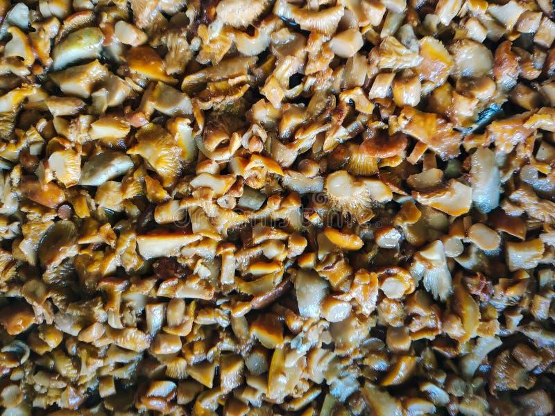 Funghi affettati per friggere fotografie stock libere da diritti