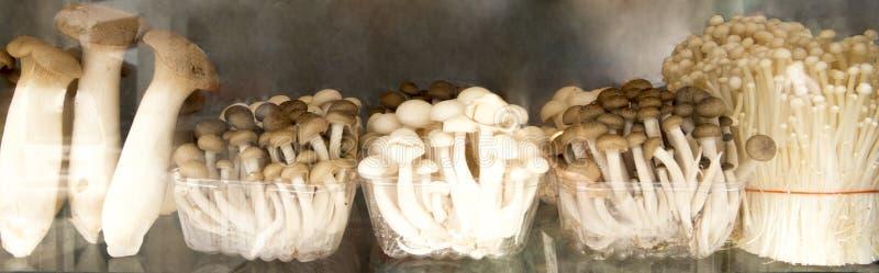 Funghi Assorted immagini stock