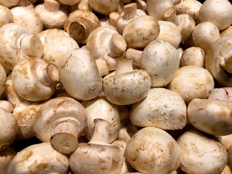 Funghi bianchi fotografie stock libere da diritti