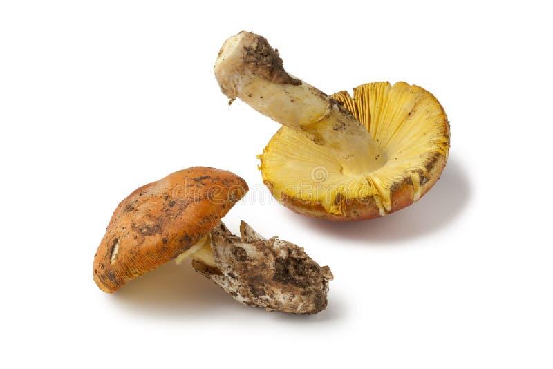 Funghi commestibili freschi dell'amanita immagine stock libera da diritti