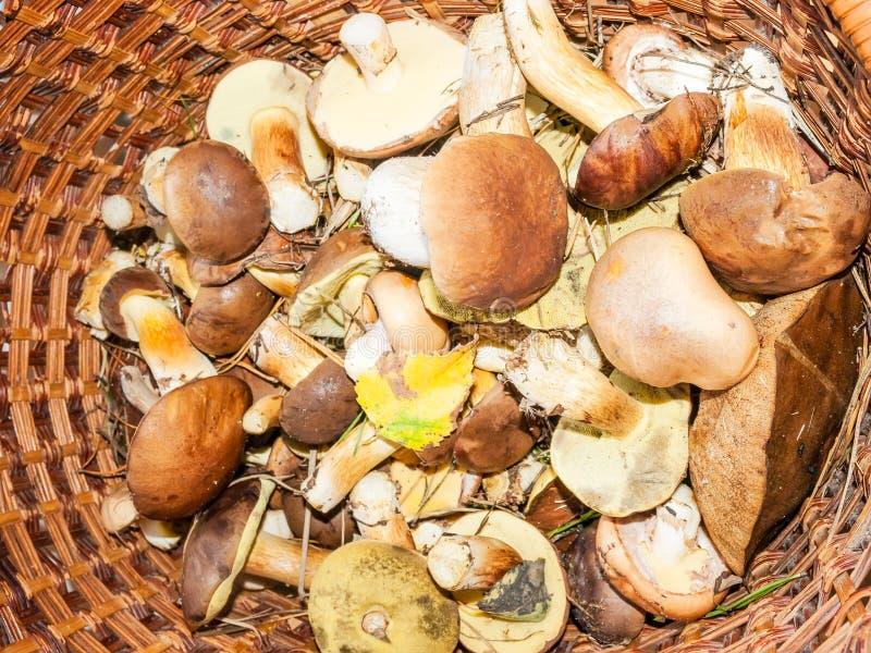 Download Funghi Commestibili Nel Canestro Immagine Stock - Immagine di cottura, cestino: 55365179