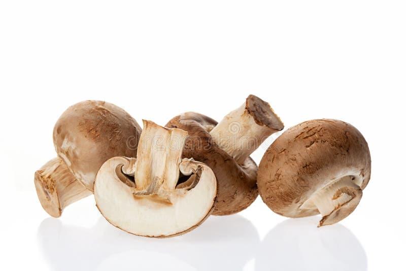 Funghi crudi freschi del fungo prataiolo isolati su fondo bianco fotografia stock