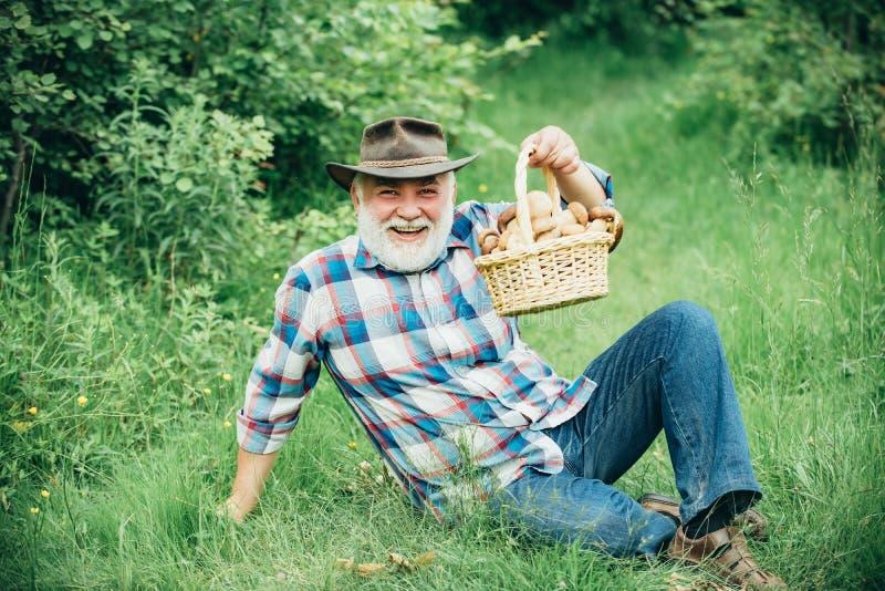 Funghi da prelievo Buon nonno, estate e hobby Vecchio che cammina Nonno Pensionato Alti escursionisti nella foresta fotografia stock libera da diritti