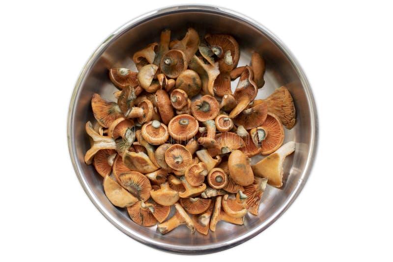 Funghi del pino rosso in una pentola fotografia stock
