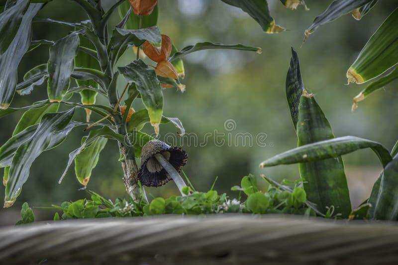Funghi della foresta sotto i fiori sboccianti fotografia stock