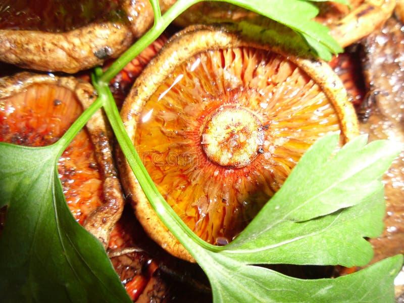 Funghi della montagna Sistemato, pulito e cucinato fotografia stock libera da diritti