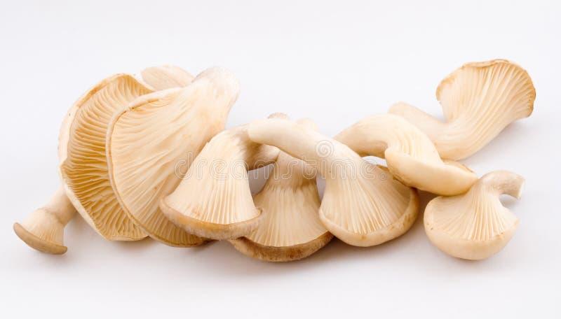 Funghi di ostrica immagini stock libere da diritti
