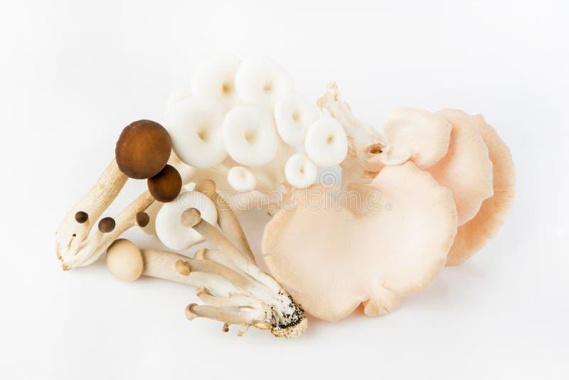 Funghi di ostrica e fungo di yanagi immagine stock libera da diritti