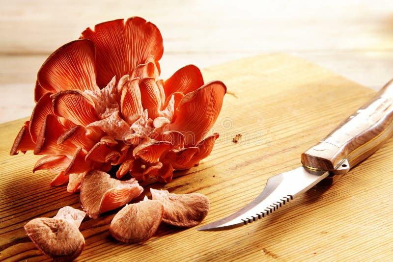 Funghi di ostrica rossi in un mazzo dello scaffale immagine stock libera da diritti