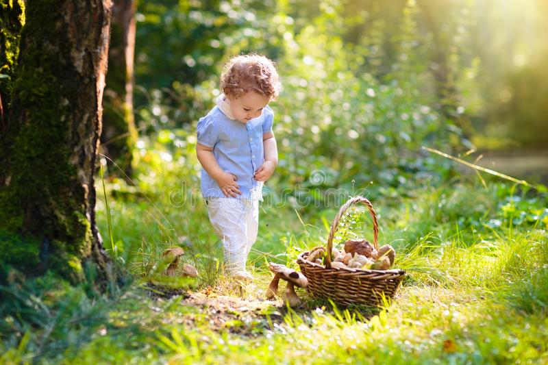 Funghi di raccolto della bambina nel parco di autunno fotografia stock libera da diritti