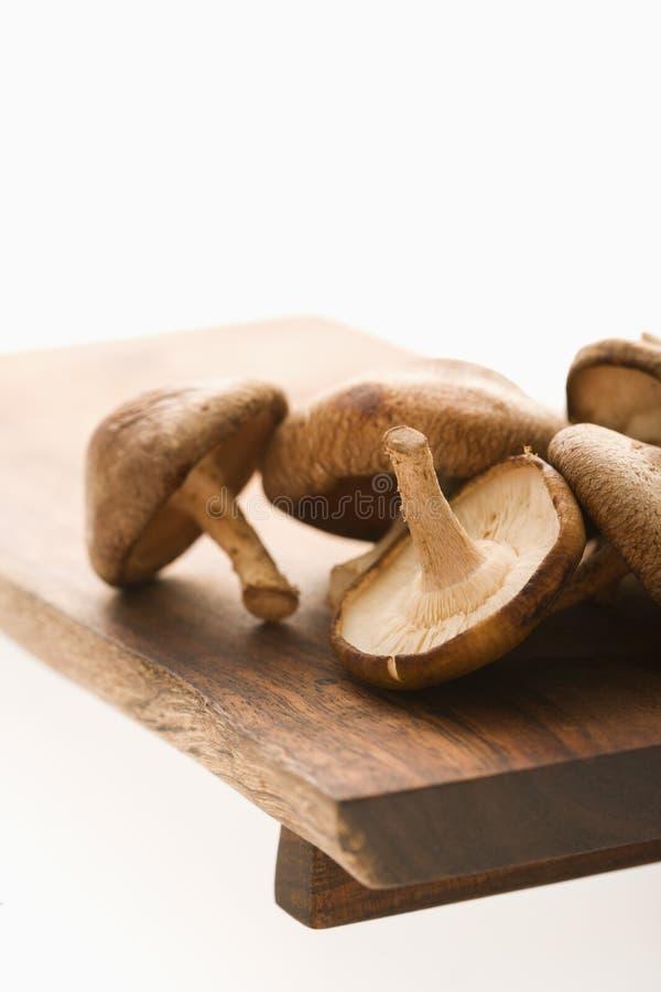 Funghi di Shiitake. fotografie stock