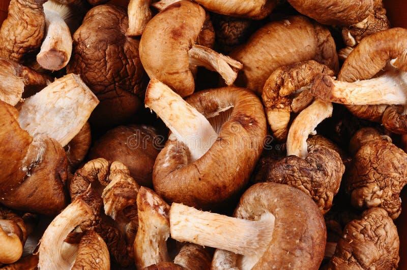 Funghi di shiitake crudi immagini stock libere da diritti