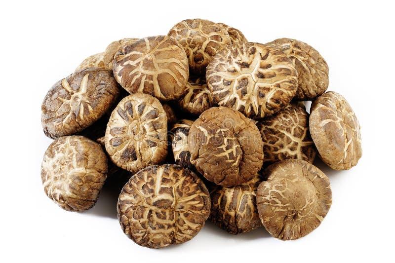 Funghi di shiitake secchi fotografie stock libere da diritti