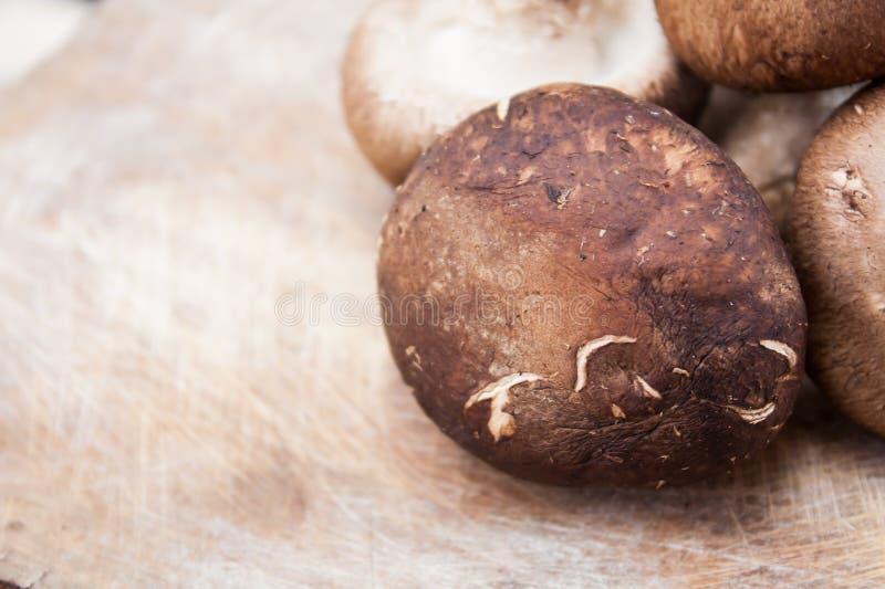 Funghi di Shitake immagine stock