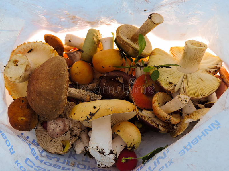 Funghi differenti in un sacchetto di plastica fotografia stock libera da diritti