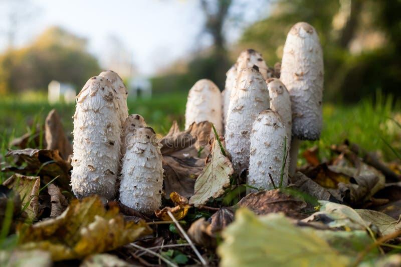 Funghi fra le foglie immagini stock libere da diritti