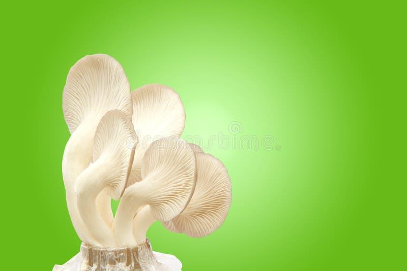 Funghi freschi immagine stock
