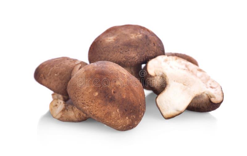 Funghi freschi isolati su bianco fotografie stock
