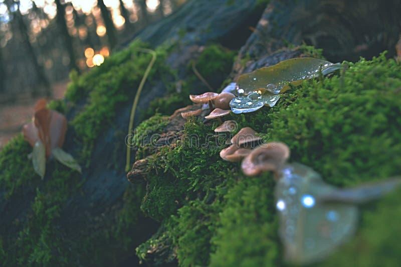 Funghi magico vivaci sul tronco di albero morto fotografia stock