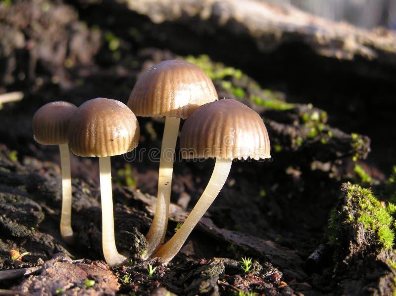 Funghi molto piccoli immagine stock libera da diritti
