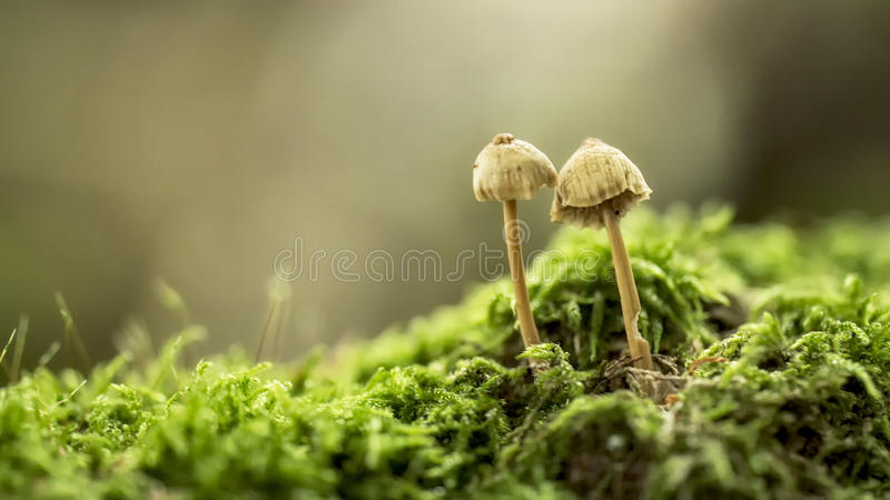 Funghi na floresta imagem de stock royalty free