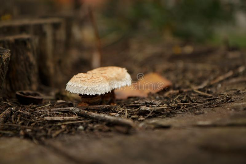 Funghi nella foresta immagini stock libere da diritti