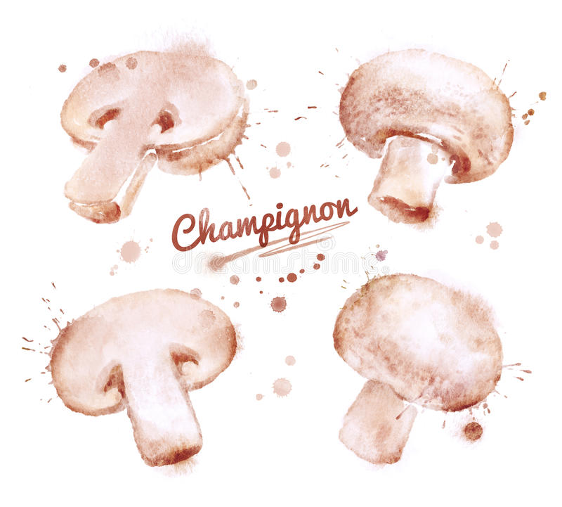 Funghi prataioli dell'acquerello illustrazione di stock