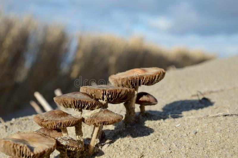 Funghi in sabbia fotografia stock