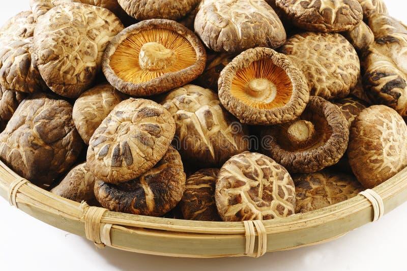 Funghi secchi immagine stock