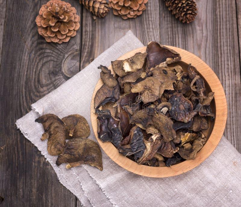 Funghi secchi della foresta fotografia stock libera da diritti