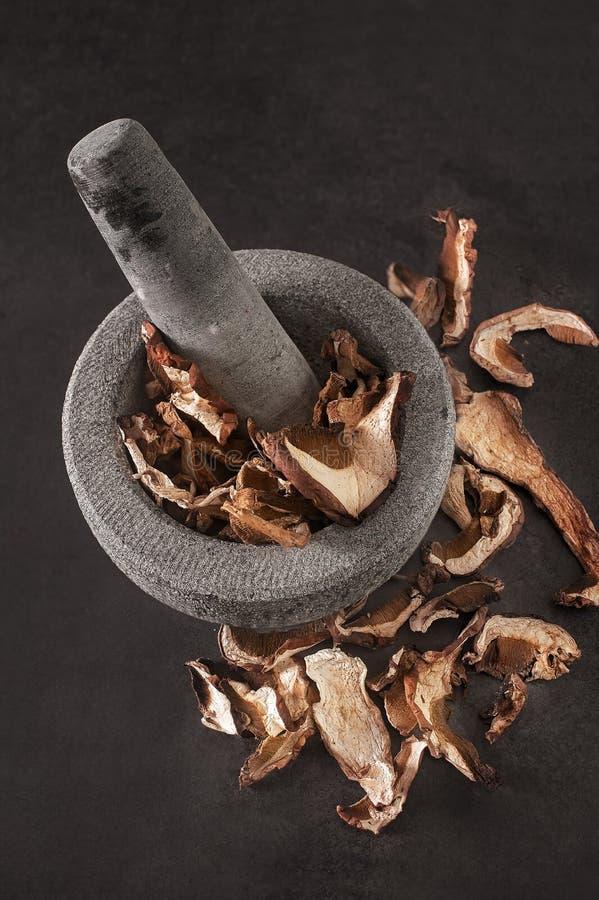 Funghi secchi su una pietra fotografia stock